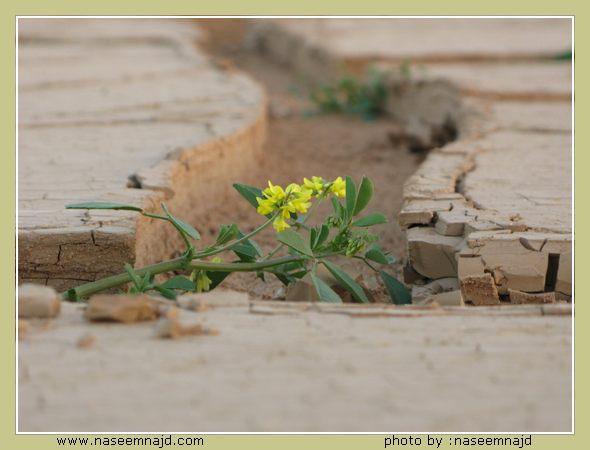صور الربيع و الفياض والرياض