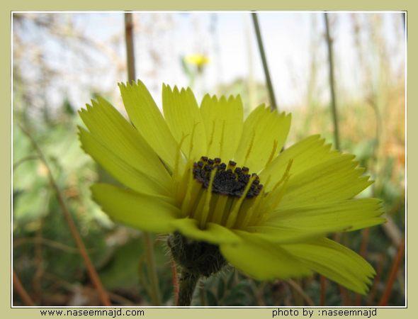 صور الزهور و الربيع
